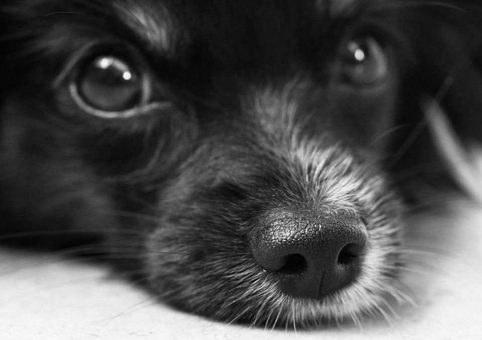 dog Friendly Lytham